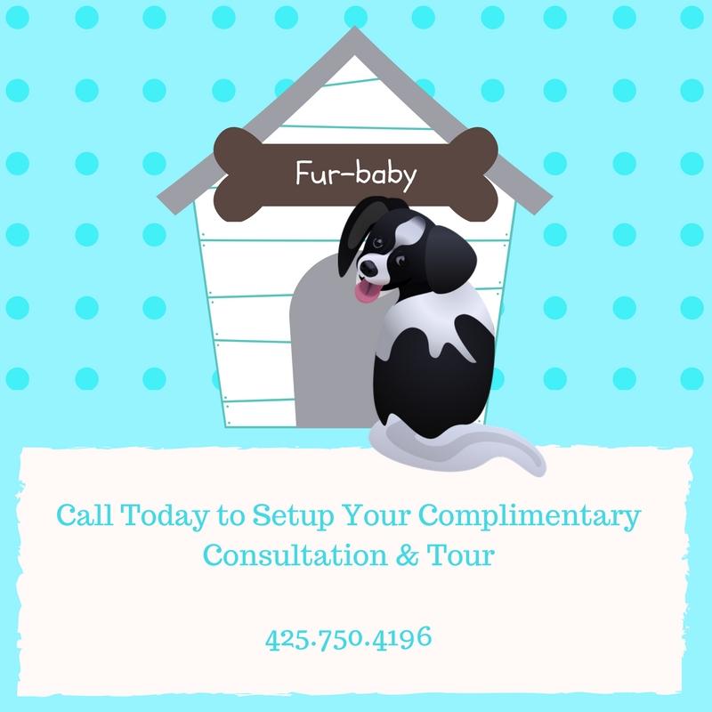 dog daycare, dog boarding, small dog, little dog, toy breed dog, lynnwood wa, edmonds wa