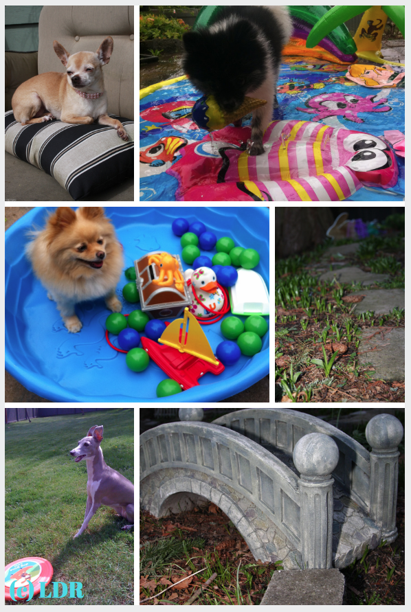 small dog, little dog, tiny dog, daycare, boarding, toy breed dog daycare