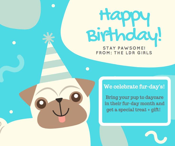 dog daycare, dog birthday, furday, boarding