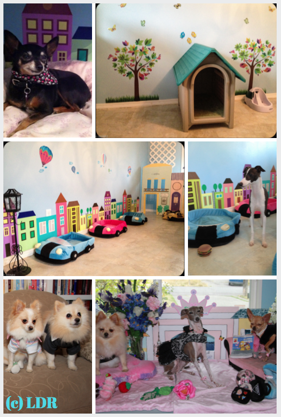 dog daycare, dog boarding, lynnwood wa