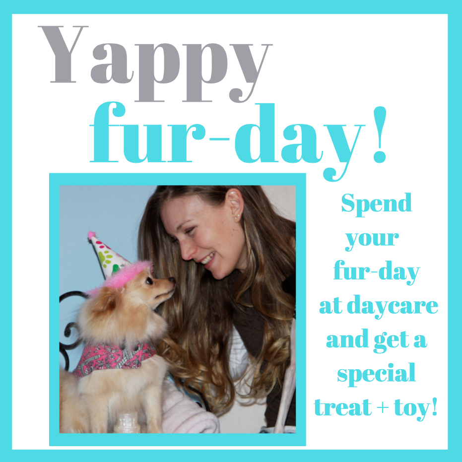 dog daycare, dog fur-day, dog birthday