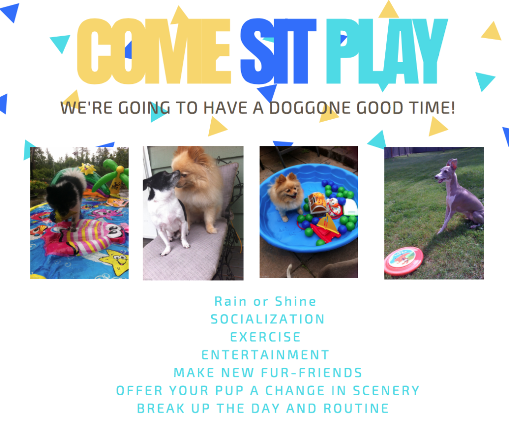the little dog retreat dog daycare and dog boarding lynnwood top 6 reasons to bring you pup to dog daycare